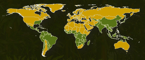 Countries Bamboo Is Grown