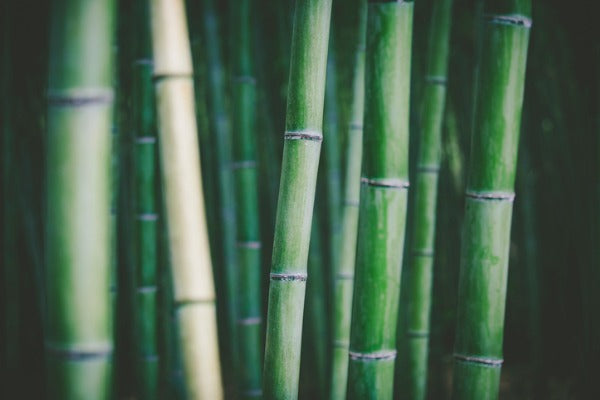 organic bamboo forest
