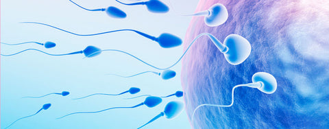 male fertility supplements to improve sperm quality