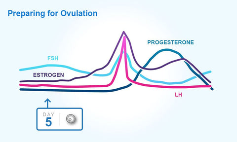 menstrual cycle early ovulation