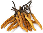 Fertility Supplement | Wild Himalayan Cordyceps - FertiGenic