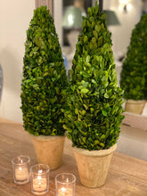 Load image into Gallery viewer, Cone Buxus Tree 50cm