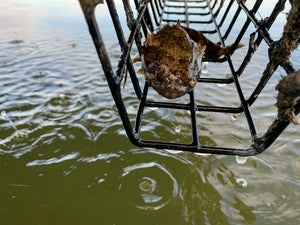 Good News: Oyster Farms are Underwater Food Hubs
