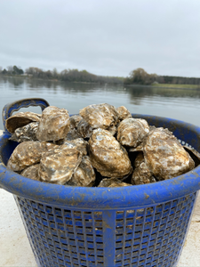 What's the Best Way to Store Oysters?