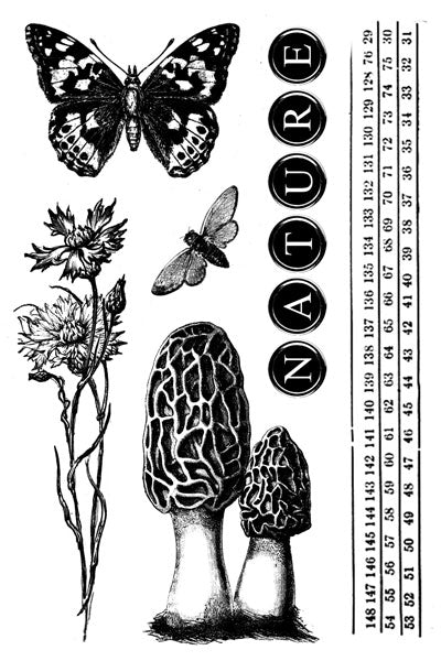 Nature Walk- Coordinating clear stamps