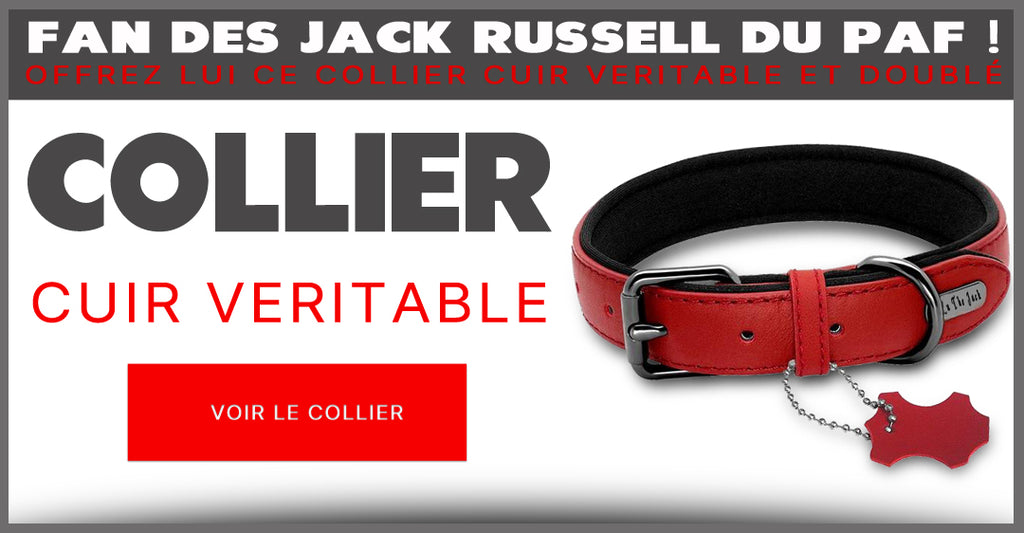 Collier Cuir The Jack   Boutique Jack Russell