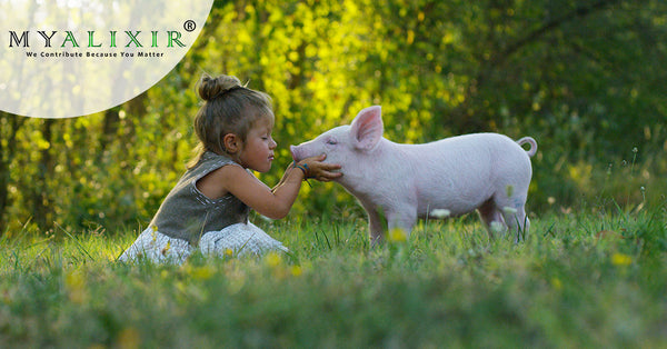 MYALIXIR Vegan Supplements - Vegan Multivitamin Supplements: Your Key To Cruelty Free Immunity blog image - a young  child kissing a pig - green leave or garden background