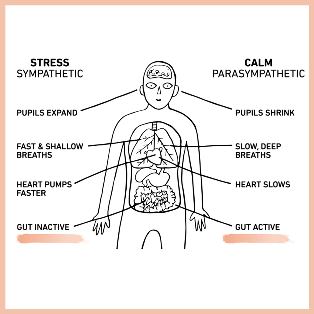 A stressed metabolism causes gut dysfunction | My Way Up