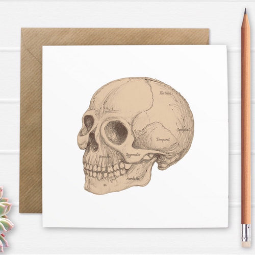 Anatomical Skull Illustration Greetings Card - Cherry Pie Lane