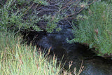 ATHENEA GOLD Placer Mining Claim, Taylor Creek, Beaverhead County, Montana
