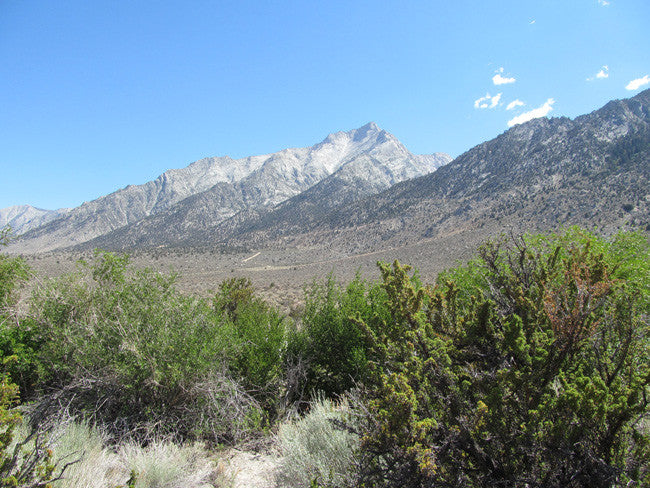 GOLDEN STAR Mining Claim, Lone Pine, Inyo County, California