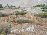 BLUE MOON Mine Placer Claim in Colorado, Mt Antero