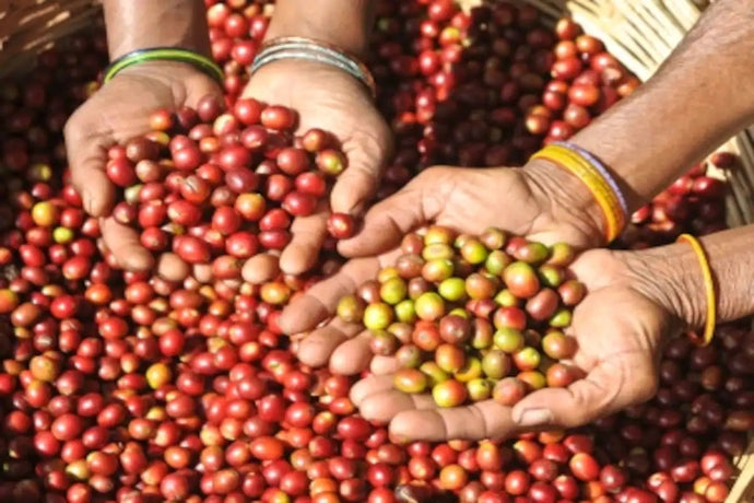 Coffee of the Araku Valley