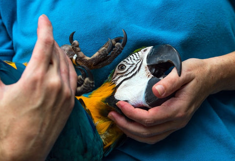 getting your parrot to trust you