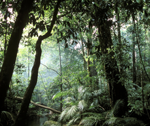 Load image into Gallery viewer, Langkawi Rainforest After Dark