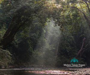 Mutiara Taman Negara, Pahang | 3D2N | National Park Back to Nature