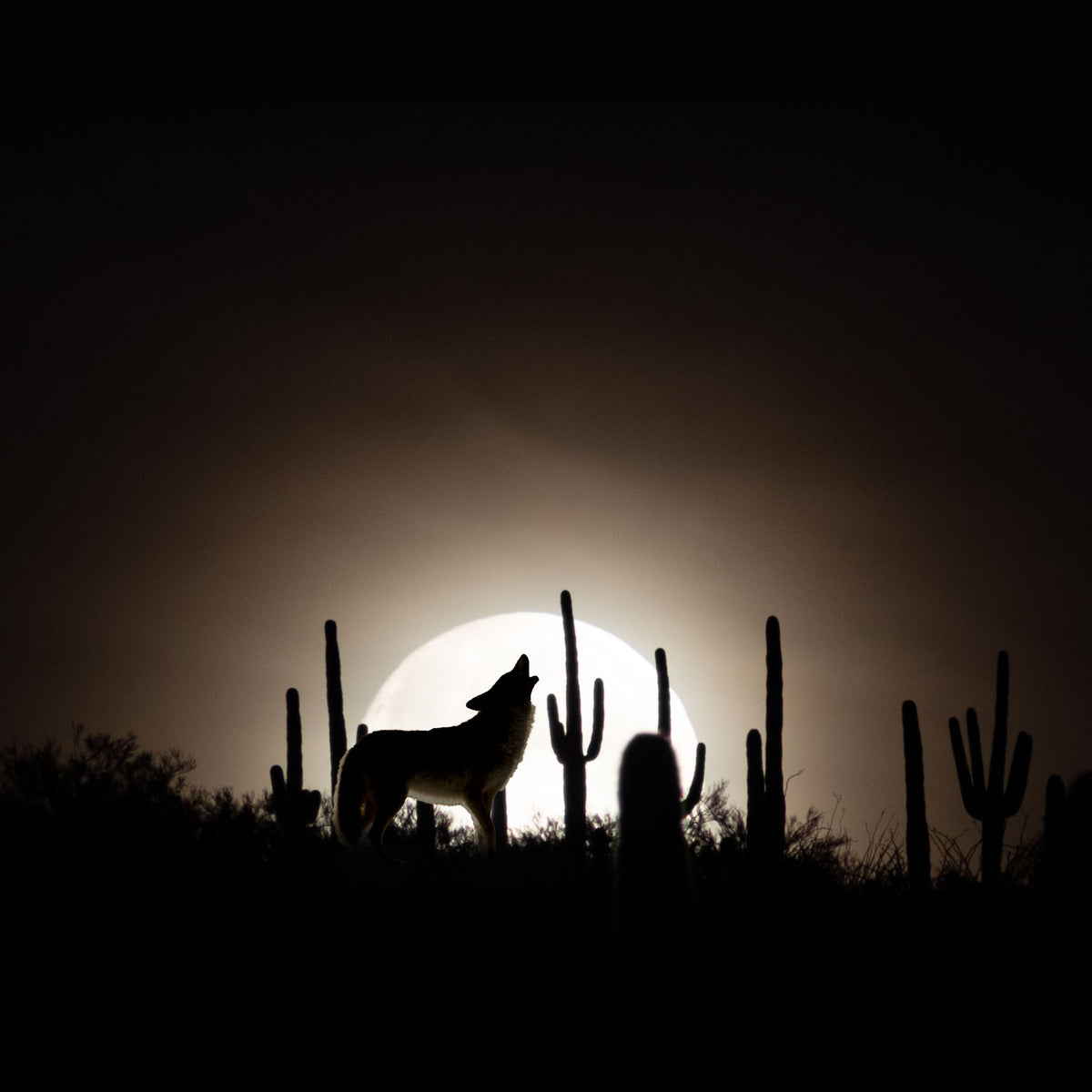 HELD Whipped Shea Butter