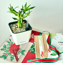 Load image into Gallery viewer, [LIMITED EDITION] Christmas Plant Bundle