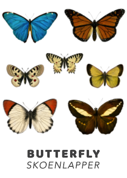 Butterfly PDF Download