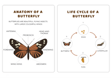 Load image into Gallery viewer, Butterfly PDF Download