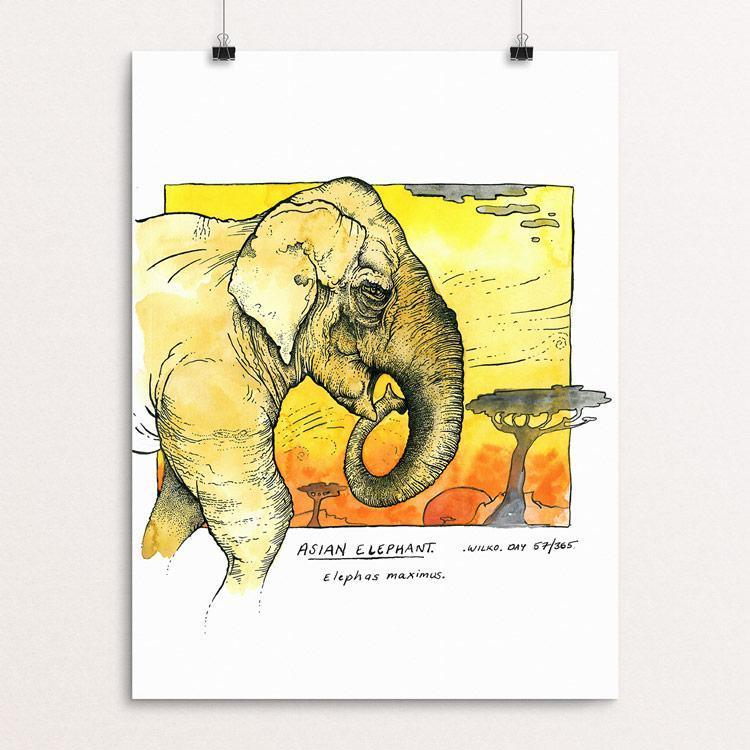 "Asian Elephant by Rob Wilkinson 12"" by 16"" Print / Unframed Print Creative Action Network"