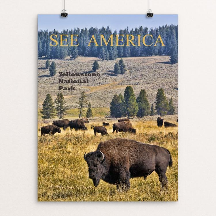 "Bison herd in Yellowstone NP, Wyoming by Michael Burke 12"" by 16"" Print / Unframed Print See America"