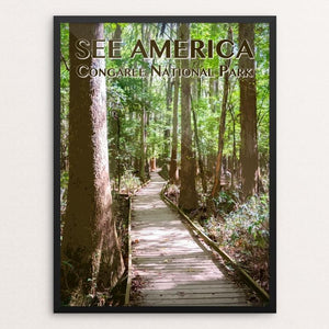 "Congaree National Park by Zack Frank 12"" by 16"" Print / Framed Print See America"