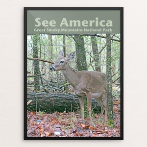 "Great Smoky Mountains National Park 3 by Jennie Lambert 12"" by 16"" Print / Framed Print See America"