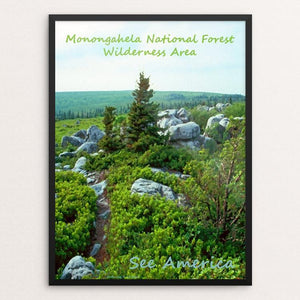 "Monongahela National Forest Wilderness Area by Anthony Chiffolo 18"" by 24"" Print / Framed Print See America"