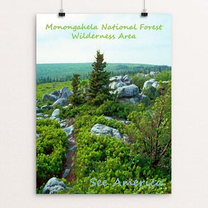 "Monongahela National Forest Wilderness Area by Anthony Chiffolo 18"" by 24"" Print / Unframed Print See America"