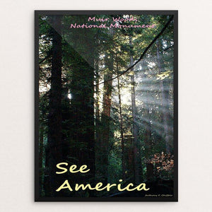 "Muir Woods National Monument 2 by Anthony Chiffolo 12"" by 16"" Print / Framed Print See America"