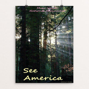 "Muir Woods National Monument 2 by Anthony Chiffolo 12"" by 16"" Print / Unframed Print See America"