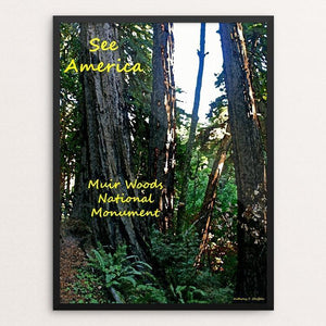 "Muir Woods National Monument 3 by Anthony Chiffolo 18"" by 24"" Print / Framed Print See America"