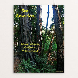 "Muir Woods National Monument 3 by Anthony Chiffolo 18"" by 24"" Print / Unframed Print See America"