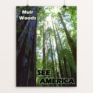 "Muir Woods National Monument by Eitan S. Kaplan 12"" by 16"" Print / Unframed Print See America"