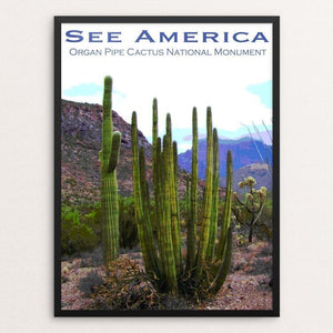 "Organ Pipe Cactus National Monument 2 by Ann Huston 12"" by 16"" Print / Framed Print See America"