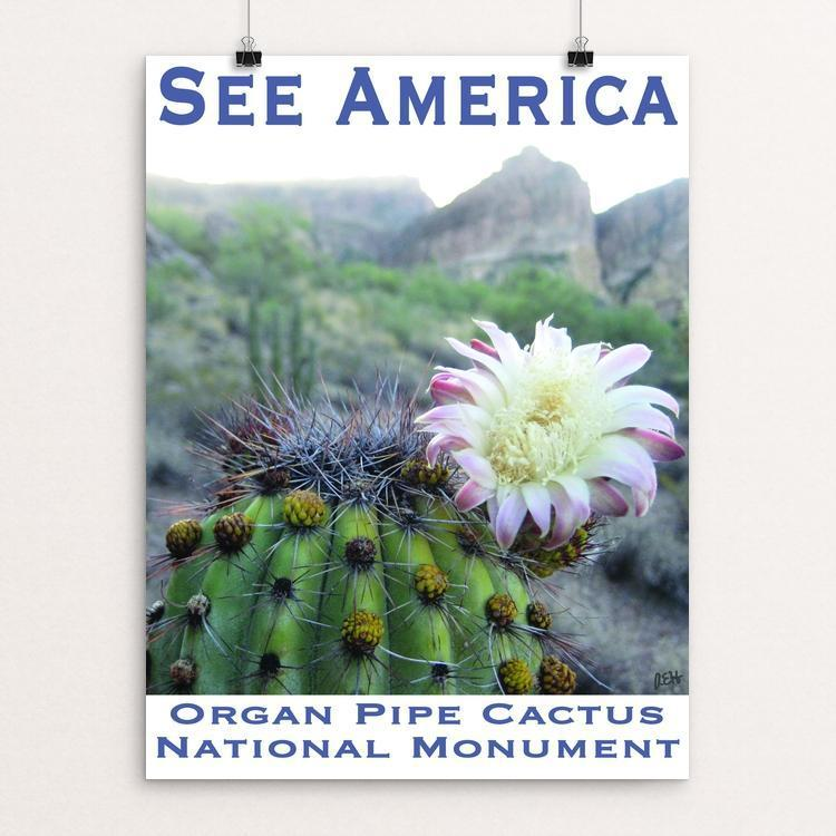 "Organ Pipe Cactus National Monument by Ann Huston 12"" by 16"" Print / Unframed Print See America"