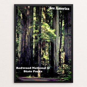 "Redwood National and State Parks by Colin Wheeler 12"" by 16"" Print / Framed Print See America"