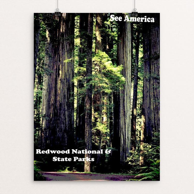 "Redwood National and State Parks by Colin Wheeler 12"" by 16"" Print / Unframed Print See America"