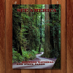"Redwood National and State Parks by Mario Vaden 12"" by 16"" Print / Unframed Print See America"