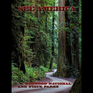 Redwood National and State Parks by Mario Vaden