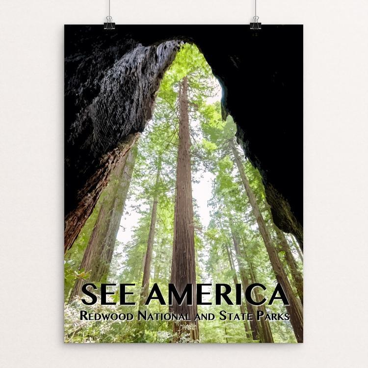 "Redwood National and State Parks by Zack Frank 12"" by 16"" Print / Unframed Print See America"