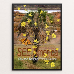 "St Marks National Wildlife Refuge by S Chang 12"" by 16"" Print / Framed Print See America"