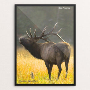 "Yellowstone National Park 2 by Vito Marrone 12"" by 16"" Print / Framed Print See America"