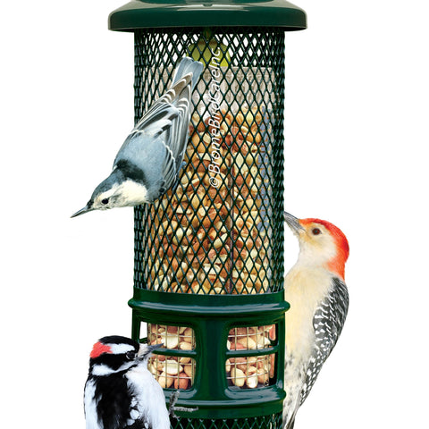 Brome Bird Care Squirrel Buster™ Peanut Wire Mesh Bird Feeder