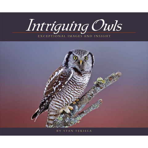 Intriguing Owls Book
