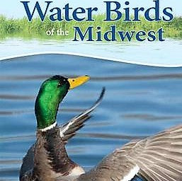 Water Birds of the Midwest Adventure Quick Guide