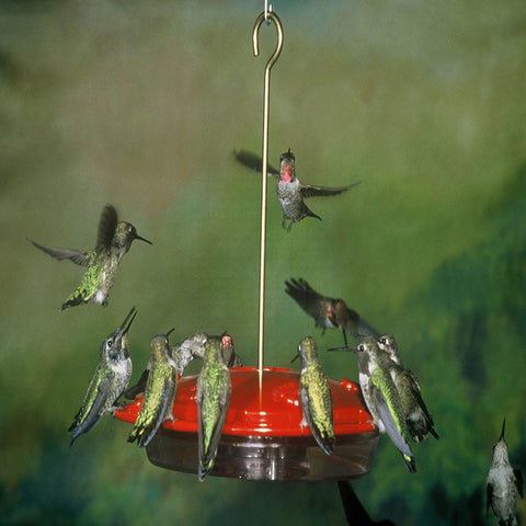double view yellow hummingbird feeder red nectar dots quick hanging