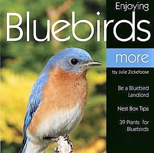 Enjoying Bluebirds More Book