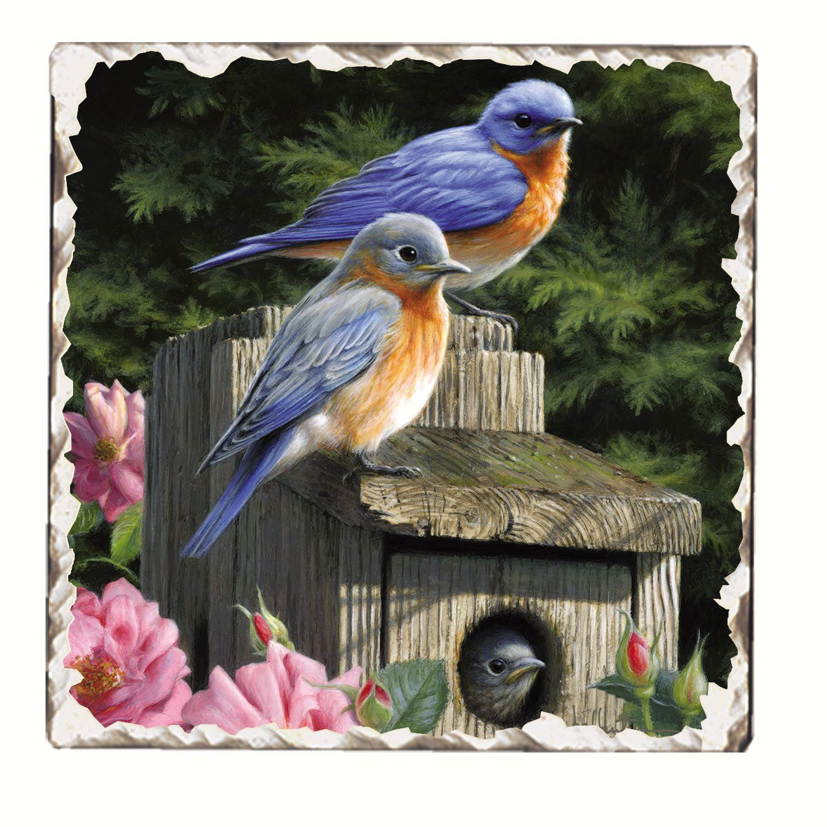 Bluebird Family Single Tumbled Tile Coaster